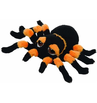 Peepers Tarantula Spinne